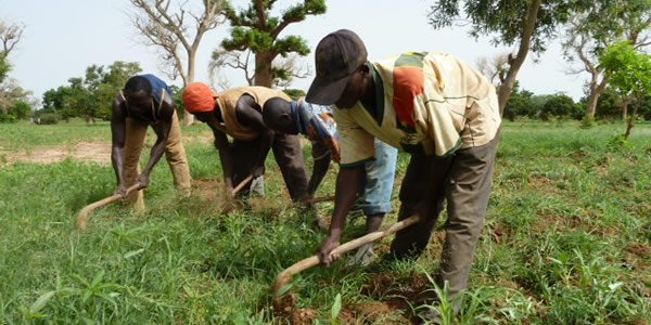 Burkina Faso: CLIMA Grows Agricultural Families